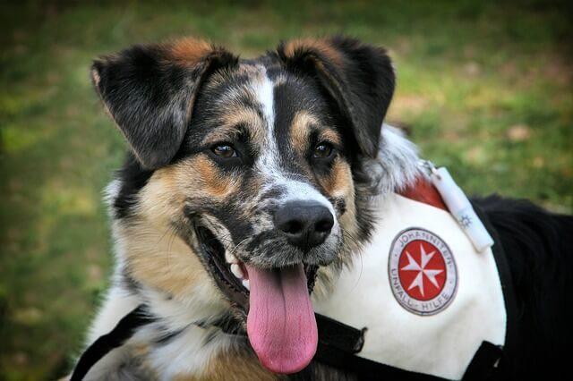Therapiehund selbst ausbilden